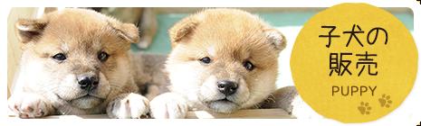 子犬の販売 PUPPY